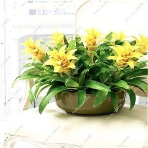 Pinkdose Meistverkaufte 100 stücke Kaktus Bromelie Sukkulente Seltene Bunte Blume Bonsai Hof Mini Anlage Sukkulente Bonsai DIY Hausgarten: 19