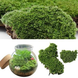 1 pièce décorative Artificielle Verte en Mousse – Paysage Miniature – Boule de Mousse – Décoration de Jardin – Terrarium – Décoration d'aquarium – Bonsaï – Loisirs créatifs