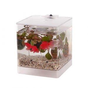 BOTANICLY | Waterworld Mini aquarium avec éclairage à LED, une plante aquatique et 2 poissons rouges en plastique | Hauteur: 20 cm