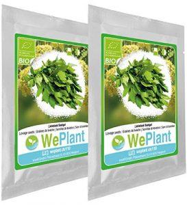 BIO Livèche – Graines de plantes aromatiques/Intérieur & Extérieur