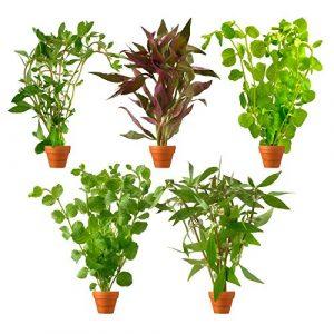 BOTANICLY | Plante aquatique – Waterworld Mélange de plantes d'aquarium | Hauteur: 15 cm
