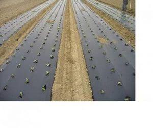 Filnova Biotelo Toile de paillage biodégradable, 1x100m, 15microns